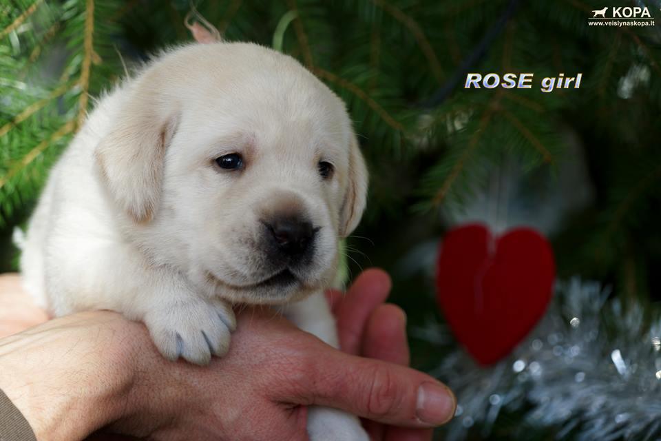ROSE girl 1 copy