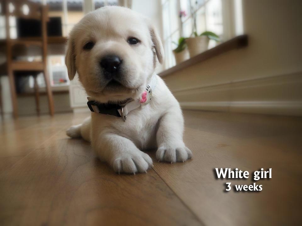 White girl, 3 w copy