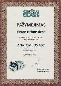2019-11-16 Anatomijos ABC