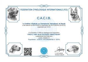 Bellos Cacib1