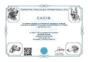 Eklero CACIB