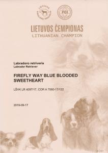 LT CH Firefly Way Blue Blooded sweetheart